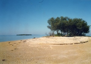 Bird Island as it was in the early 1990s