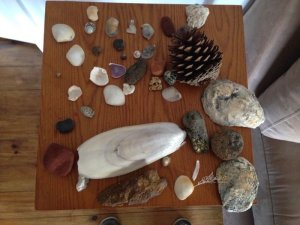 The start of Clementine's shell collection