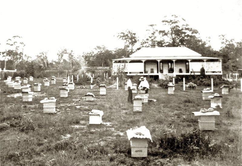 The Dorunda's Bees